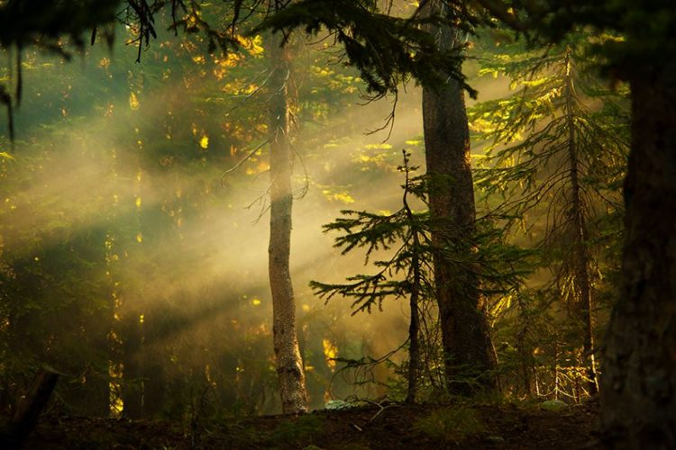 forest in sunlight and shade